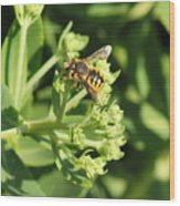 Bee Resting Wood Print