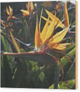 Bee Resting On The Petals Of A Bird Of Paradise  Wood Print