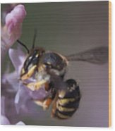Bee Sipping Nectar Wood Print