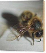 Bee Sitting On A White Sheet Wood Print