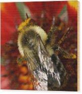 Bee Six - Wood Print
