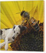 Bee With Dog Wood Print