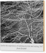 Beech Tree Branches, Light And Shadow Wood Print