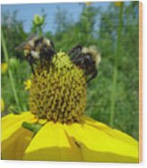 Bees At Work Wood Print