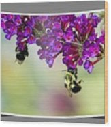 Bees On Butterfly Bush Framed Wood Print