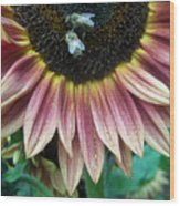 Bees On Sunflower 107 Wood Print