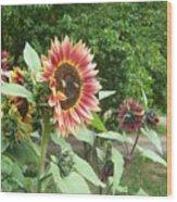 Bees On Sunflower 108 Wood Print