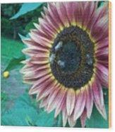 Bees On Sunflower 109 Wood Print
