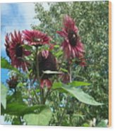 Bees On Sunflower 120 Wood Print