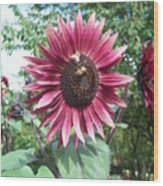 Bees On Sunflower 123 Wood Print
