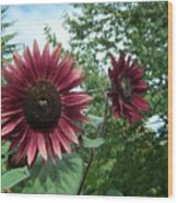 Bees On Sunflower 125 Wood Print