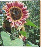 Bees On Sunflower 127 Wood Print