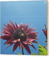 Bees On Sunflower 128 Wood Print