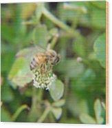 Bees Please Wood Print