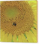 Bees Share A Sunflower Wood Print