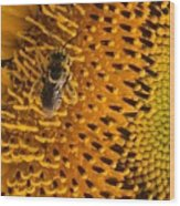 Bee's Sunflower Wood Print