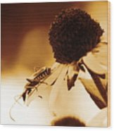 Beetle And Black Eyed Susan Wood Print