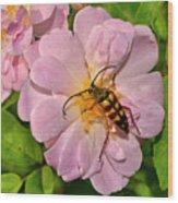 Beetle In A Rose 003 Wood Print
