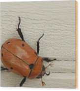 Beetle Wood Print