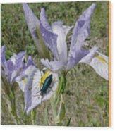 Beetle On Iris Wood Print