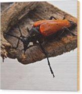 Beetle Pondering Wood Print