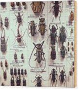 Beetles Wood Print