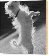 Begging Dog Black And White Wood Print