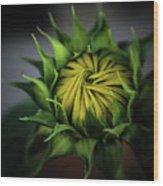 Beginnings Sunflower Xiii Wood Print