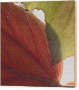 Begonia 1 Wood Print