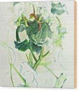 Begonia Ballet Wood Print