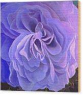Begonia Bloom Wood Print