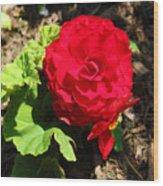 Begonia Flower - Red Wood Print