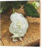 Begonia In Repose Wood Print