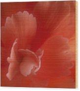 Begonia Wood Print