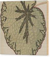 Begonia Marshallii  Wood Print