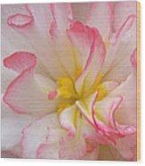 Begonia Pink Frills - Vertival Wood Print