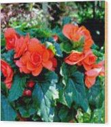 Begonia Plant Wood Print