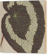 Begonia Rex Wood Print
