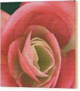 Begonia Rose Wood Print by Ryan Kelly