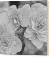 Begonias In Black And White Wood Print