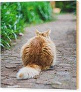 Behind The Cat Wood Print