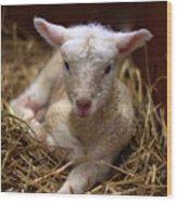 Behold The Lamb Wood Print