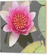 Beijing Lotus Wood Print