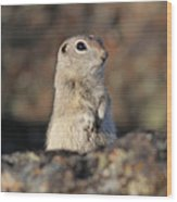 Belding Ground Squirrel Wood Print