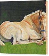Belgian Horse Foal Wood Print