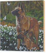 Belgian Malinois With Pup Wood Print