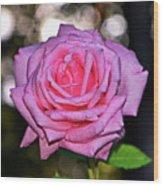 Belinda's Dream Rose 004 Wood Print