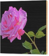 Belinda's Dream Rose 005 Wood Print