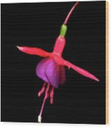 Bell Flower Blossom Wood Print