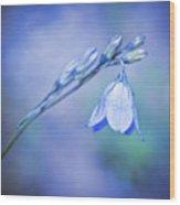 Bell Flower Wood Print